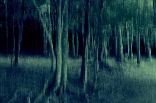 Walking Trees van