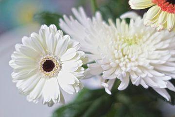 Astra- und Gerbera-Blumen von Marianna Pobedimova