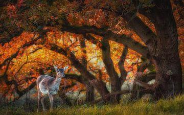 Cerf d'automne sur Arjen Noord