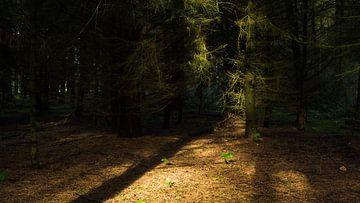 Licht van Esther van Nes
