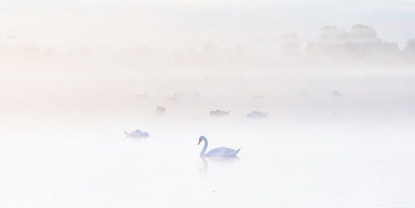 Zwanen in de mist von Jenco van Zalk