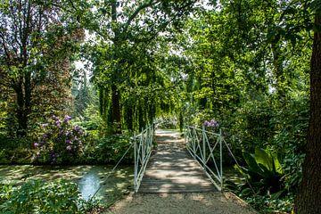 Rotterdam-Botanische Tuinen Trompenburg 04 von Hans Blommestijn