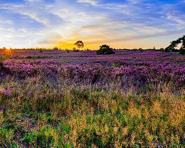 Heideflächen bei Sonnenaufgang von leon brouwer