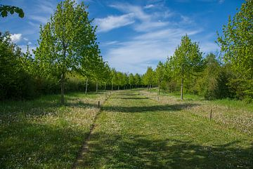 The green trail van Wilbert Burger