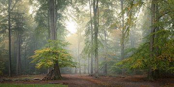 Verzauberung im Herbst von Faeline Creations
