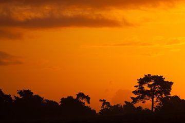 Silhouet dennenbomen met een oranje lucht