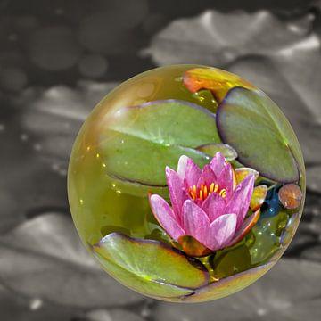 In de glazen bol - Waterlelie - Waterlelie van Christine Nöhmeier