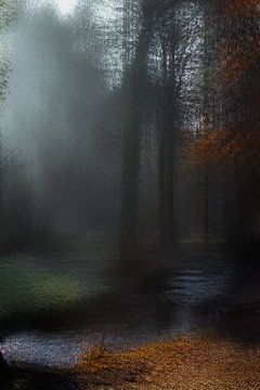 Een herfst ochtend in het Limburgse bos van Márton Gutmayer