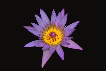 Lotus auf schwarzem Hintergrund von Ronald Smits