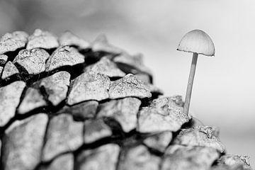 Pilz auf Kiefernzapfen von Henk Elshout