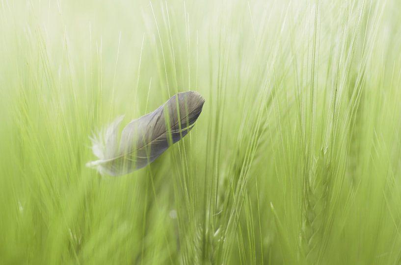 Natuurlijke vogel veer ontwerp in het korenveld zomer lopen van Tanja Riedel