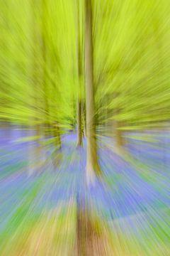Abstract zoomeffect op een beukenboom in een lentebos met blauwe wilde hyacinten bloemen van Sjoerd van der Wal