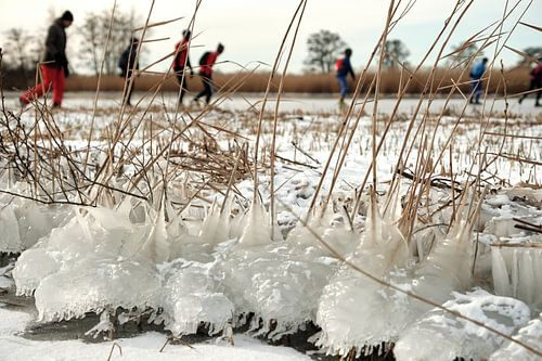 Nieuwkoopse Plassen in de winter met ijs