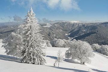 Blick zum Feldberg im Schwarzwald von Michael Valjak