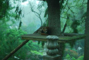 sprookjesachtige kleine rode Panda von Corinne Bekker