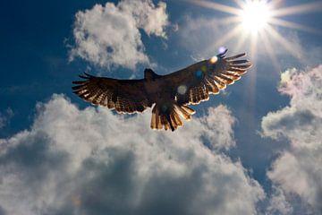 Buzzards flight to heaven van Martin Kannegieter