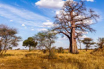 Baobab in Tanzania van René Holtslag