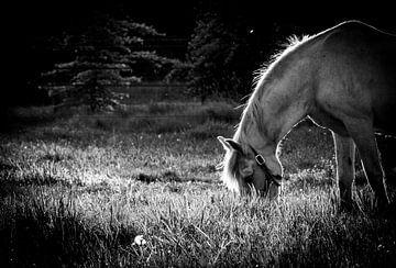 Pferd in der Abenddämmerung von Tim Briers