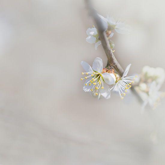 Lentebloesem van Vandain Fotografie