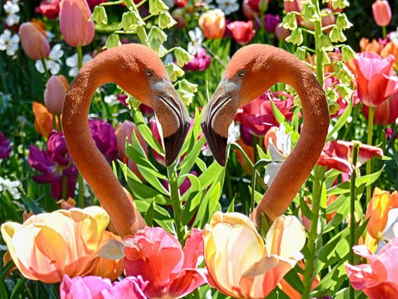 Flamingo's en Tulpen
