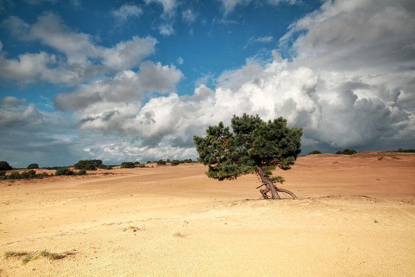 pine tree on sand dune van Olha Rohulya