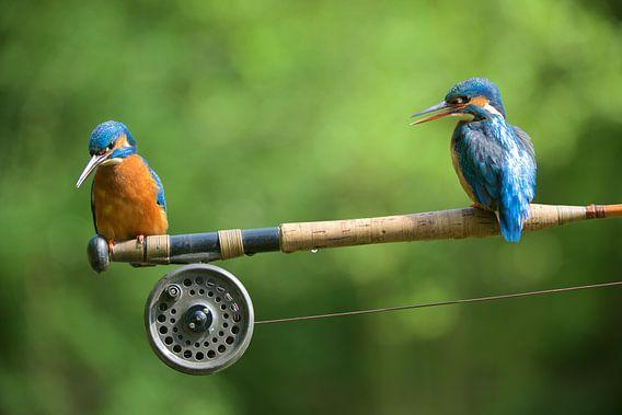 Samen vissen van Corné van Oosterhout