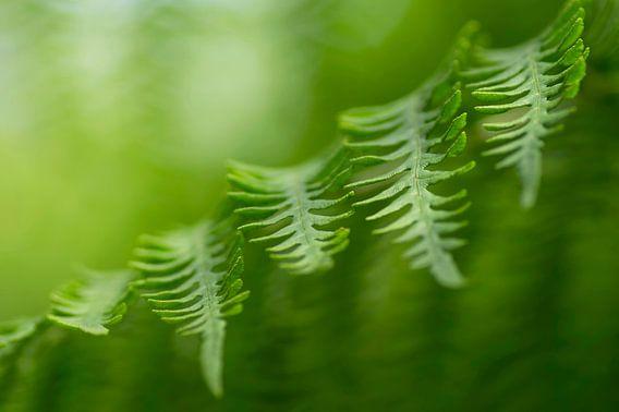 Natuurlijk groen van Birgitte Bergman