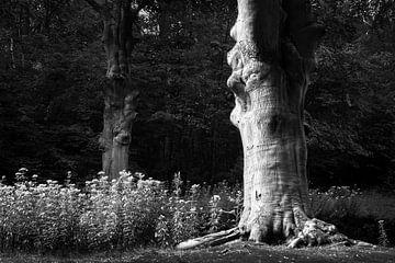 Sprookjesachtige boom in zwart-wit van Evelien Oerlemans