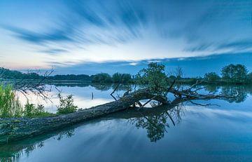 Baum im Wasser von Marcel Kerdijk