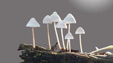 Fungi van