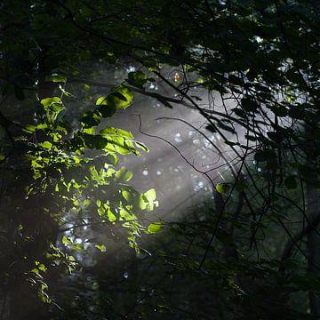 Zonnestraal van Henri Boer Fotografie