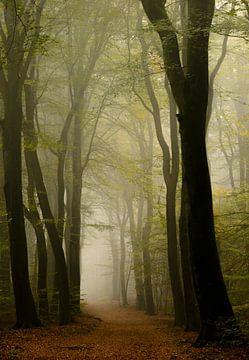 Bospad tijdens een mistige herfst ochtend van