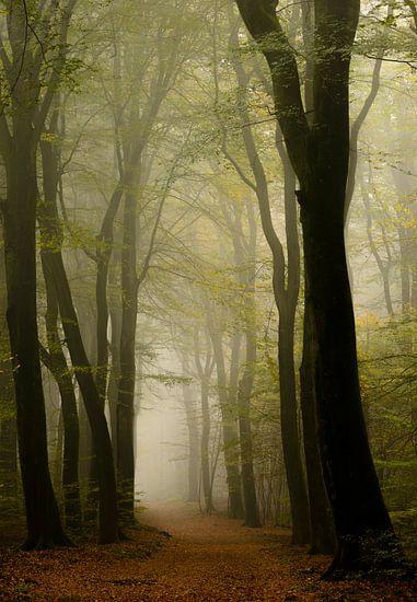 Bospad tijdens een mistige herfst ochtend