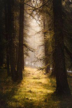 Magisch Bos van Stan Bessems