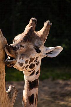 Giraffe von Erika Schouten