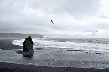Bucht bei Dyrholaey, Island, mit Papagaientauchern sur Jutta Klassen