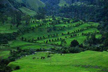 Grüne Landschaft im Nationalpark Los Nevados. Cocora-Tal nahe Salento, Kolumbien von Catalina Morales Gonzalez