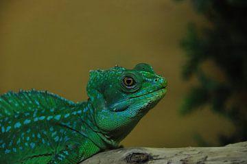 Reptiel von Fred van den Brink