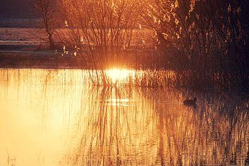 Morgensonne von Gerard van der Wal
