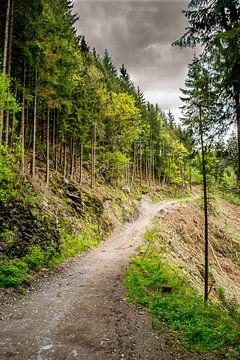 bospad langs de klif van Mark van den Burg