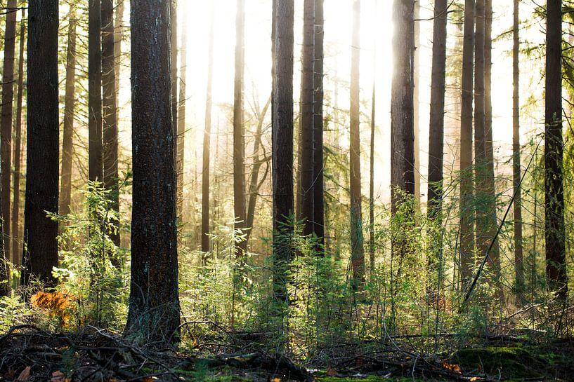 Bos van Karel Pops