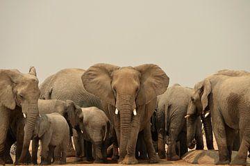 Contact oculaire avec un éléphant menaçant sur Renzo de Jonge