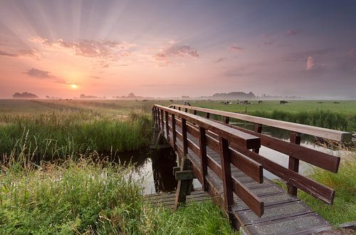Path to the sunshine