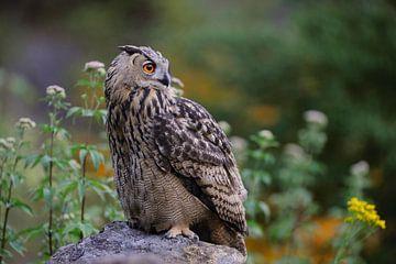 Oehoe (Bubo bubo) zit op een rots te midden van bloemen en kijkt aandachtig rond, wild, Europa. van wunderbare Erde