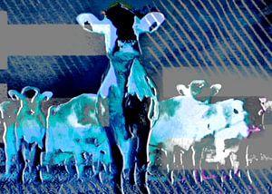 Animals, De koe