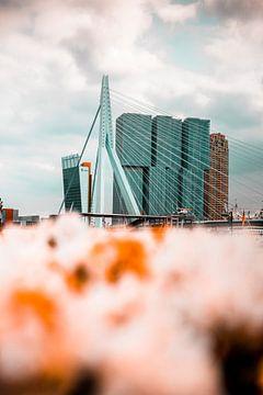 Erasmus-Brücke von Chris Koekenberg