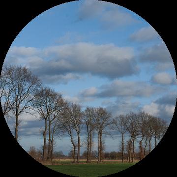 bomenrij buitengebied Gemonde, Sint-Michielsgstel van Arnoud Kunst