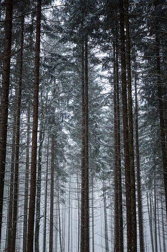 Alpsee   Winter in de Alpen