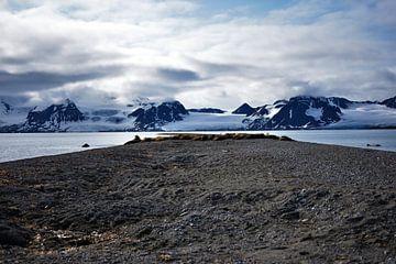 Walrus Territorium Svalbard (Spitsbergen) van Senne Koetsier
