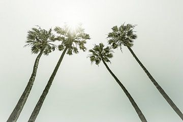 Palmbomen in de zon | Vintage van Melanie Viola